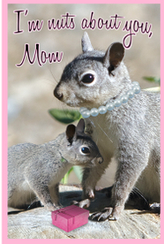 Squirrel_mothers_day