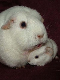 Baby_bunny_rabbit_and_mom