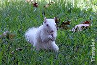 Albinosquirrelarkansascitykansas_1